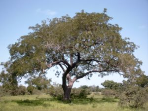 Le Soumbara